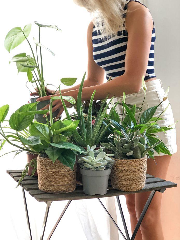 Vanwege de coronacrisis zitten er veel planten in de dozen waar niks mis mee is.