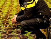 Politie rolt hennepkwekerij van drie ruimtes op in Roosendaal