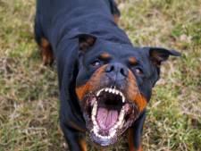 Werkstraf en schadevergoeding geëist tegen eigenaresse van rottweiler die drie kinderen beet in Nieuwegein