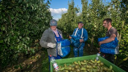 Landbouw vindt voorlopig toch voldoende seizoenarbeiders