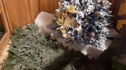 Jordy Sabels (Groen Ieper) wil geen pakjesloze kerstbomen meer, Ieperse meerderheid maakt volop werk van strijd tegen kansarmoede