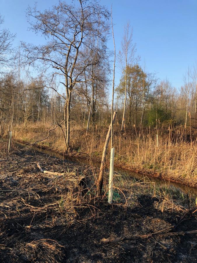 De schade na de brand in natuurgebied Spierbroek in Bornem.