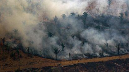 Bolsonaro verbiedt kappen en verbranden voor landbouw in Amazonegebied