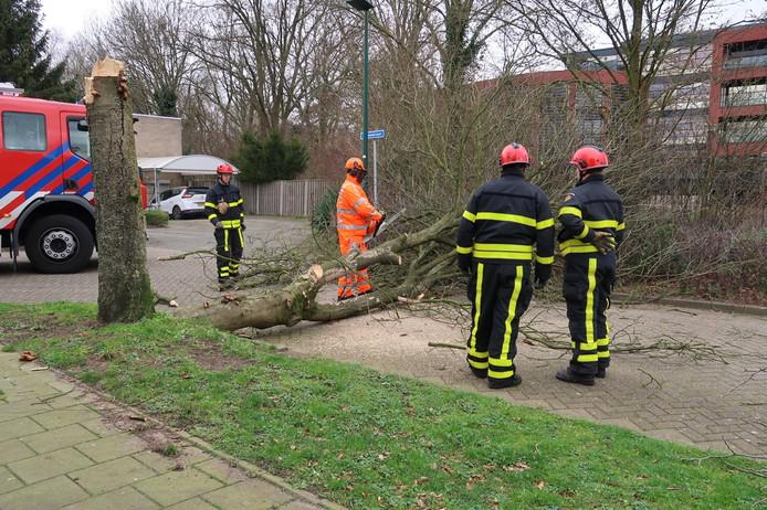Een omgewaaide boom heeft zondagmiddag de Merwedelaan in Dongen versperd.