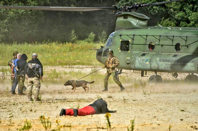 Na de landing van de Chinooks werden er grondoefeningen gedaan op de Rucphense Heide. De komende dagen wordt het laagvliegen extra geoefend. Foto Martijn de bruin / Stuve fotografie