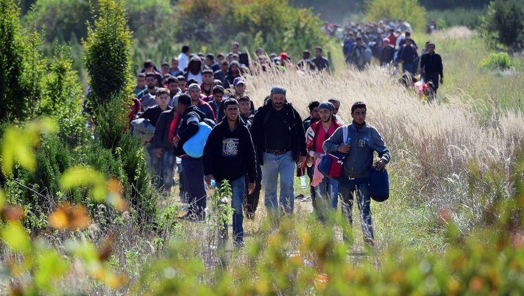 Vluchtelingen lopen vandaag over het platteland nabij het Hongaarse stadje Zakany. Beeld afp