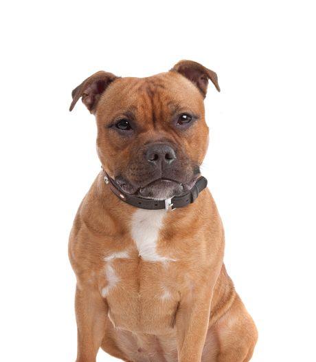 Hagenaar krijgt 'mishandelde' hond Binky niet terug: 'Ik hoorde het gejank door het dubbele glas'