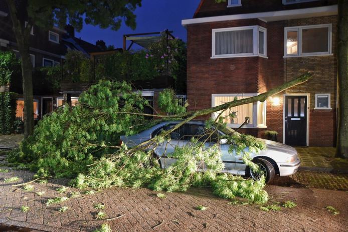 Boom gevallen op auto in Tilburg