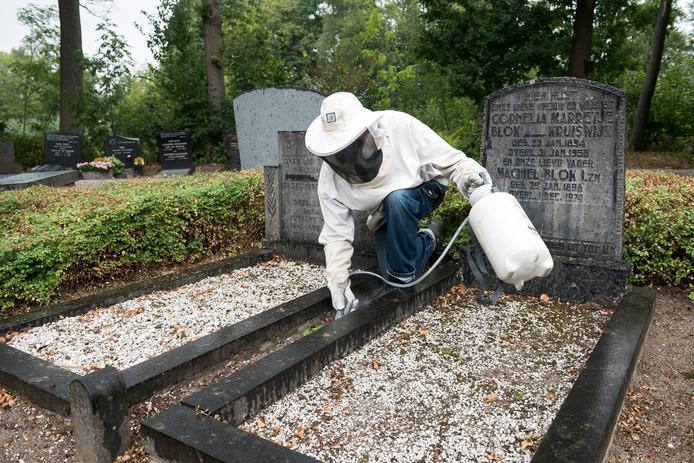 """Albert Kromwijk moet soms ook wepsen bestrijden op de begraafplaats: """"Binnen mum van tijd zitten ze in je slaapkamer.''"""