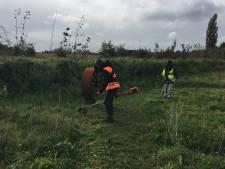 Onderhoud bijentuin Steenwijk in handen van leerlingen CSG Eekeringe