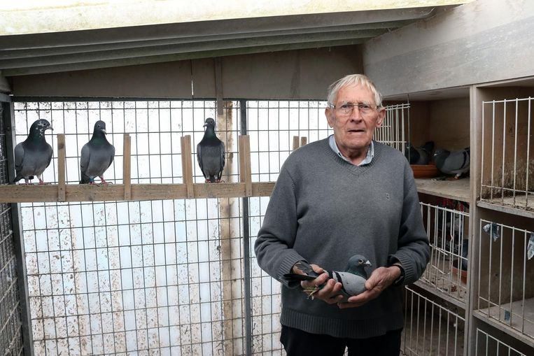 Henri Menten (79) bij zijn overgebleven duiven.