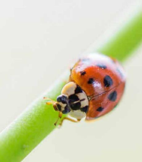'Dramatische afname  insecten in Nederland'