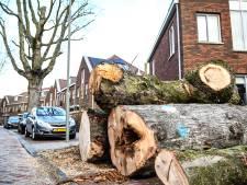 Stormen Ciara, Dennis en Ellen waren nét te veel voor Dordtse bomen