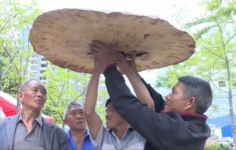 Het gevaarte weegt tien kilogram en heeft een diameter van één meter en vijf centimeter.