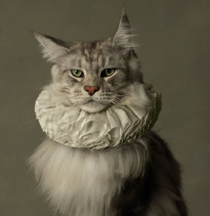 Marie Cécile Thijs: Cat with White Collar 2009