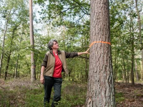 Slaat Staatsbosbeheer door met bomenkap in Vierhouterbos? 'Dit is doodzonde'
