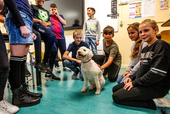 Doris is een echte schoolhond. Hij gaat al negen jaar met zijn baasje op pad. Op de Cees Wilkeshuisschool in Deventer is hij nog een bezienswaardigheid: zijn baas werkt hier sinds twee weken.