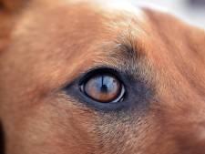 Taakstraf voor Enschedese na diefstal uit liefde voor hond