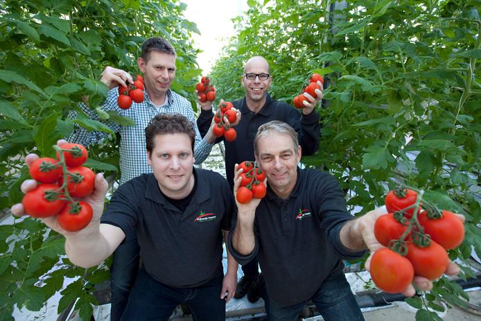 De gebroeders Duijvestijn met hun tomaten in de kas met v.l.n.r. voorgrond Ad van Adrichem en Ted, achter Peter en Remco.