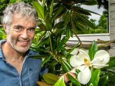 'Ossendrecht moet het magnoliadorp van Nederland worden'