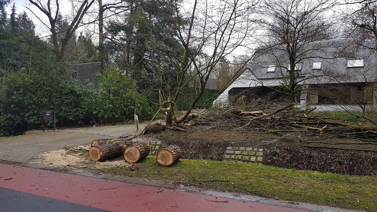 Een gesneuvelde boom tijdens de storm in maart in Schilde.