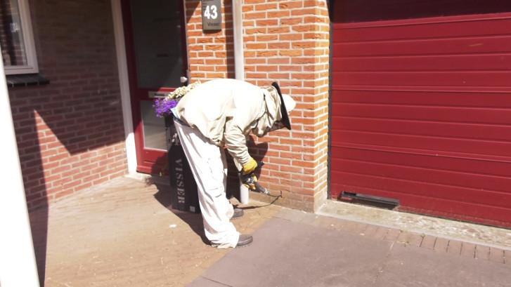 Wespenplaag in Nederland wordt alleen maar erger