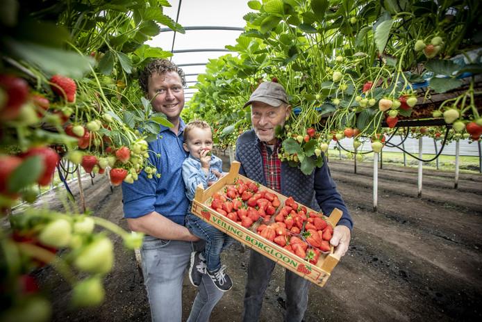 Op de foto vlnr Hardrik Hindriksen met zijn zoon Joe en zijn vader Johan van de Manderveense Aardbei.