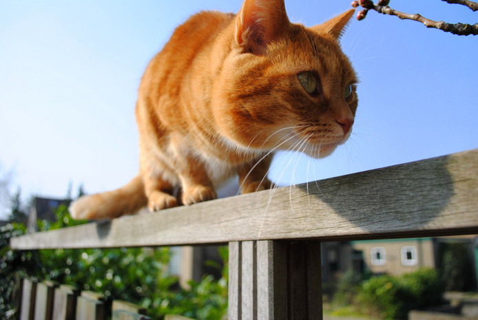 Kattenstront In Tuin : Kattenpoep in de tuin: neem verantwoordelijkheid voor kat breda