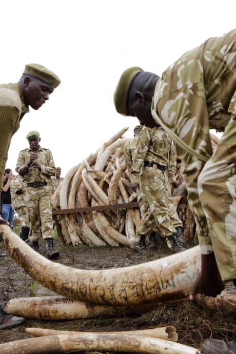 'Nederland medeschuldig aan massale olifantenslachting'