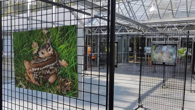 """Ludo Goossens pakt uit met natuurbeelden: """"21 bewoners van Het Leen in beeld"""""""