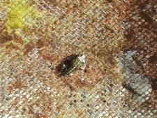 Dit is hem: een Middelburgse rugstreeppad. Hij krijgt een mooi plekje in het Molenwaterpark.