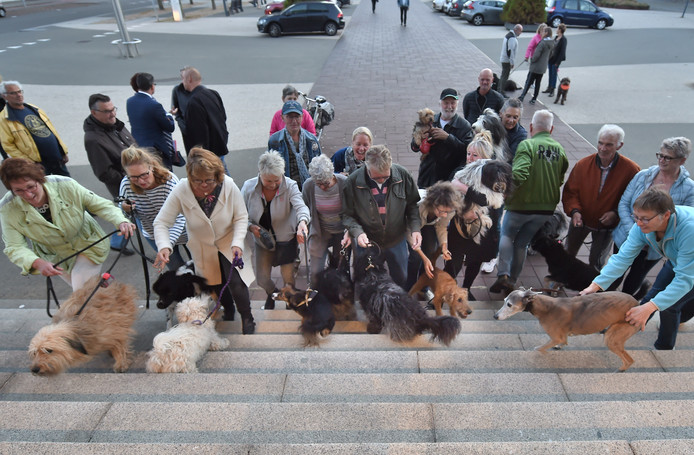 Hondenbezitters protesteren op de stoep van het gemeentehuis tegen de aanlijnplicht voor de Vlissingse stranden.