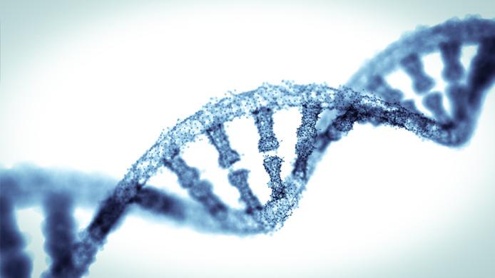 ADN (structure en double hélice)