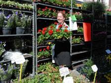 Bloemenzee op zonovergoten Geraniummarkt in Den Bosch