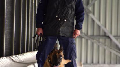 Politie houdt grootscheepse oefening met honden aan basisschool