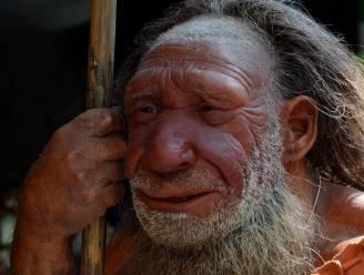 Neanderthalers gebruikten plantaardige aspirine en penicilline