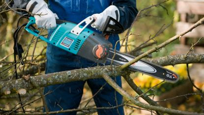 Zo check je je tuinbomen op ziektes en bescherm je je tuin tegen storm