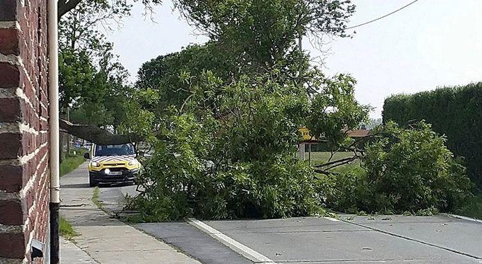 Op de Dikkebusseweg in Dikkebus sneuvelde een ferme boom. Daardoor was de rijweg een tijdje versperd.