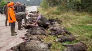 Intensieve jacht moet aantal everzwijnen halveren en Afrikaanse varkenspest inperken