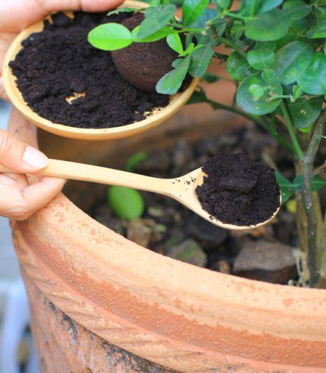 Koffiedik is wondermiddel voor de tuin en spectaculair kinderspel