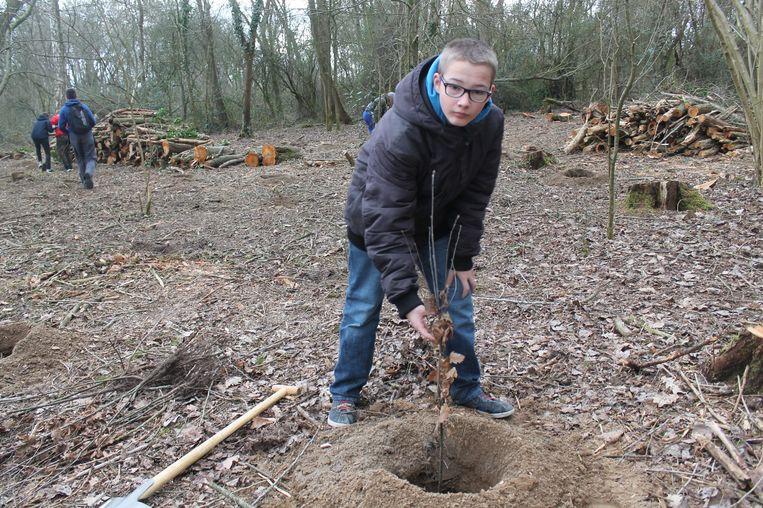 De leerlingen van het Atheneum plantten meer dan 200 bomen in het Cathemlindebos.