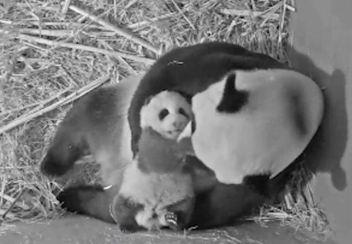 Wu Wen en baby Fan Xing vanuit het kraamhol