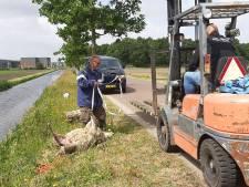Provincie: wolf mag zich niet in de omgeving van Heusden vestigen