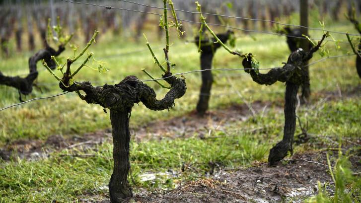 Noodweer vernielt Franse wijnvelden: ook in Brabant mogelijk grote hagelstenen