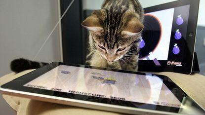 Verveelde kat? Al eens deze iPadspelletjes geprobeerd?