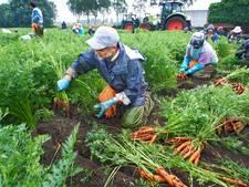 Raad Landerd vertrouwelijk geïnformeerd over Schaijkse tuinbouwer Jonkergouw