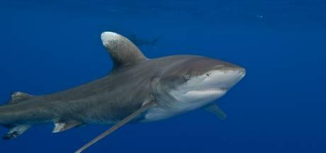 Amerikaanse (21) overlijdt na aanval door haaien bij Bahama's
