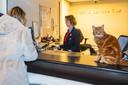 Baliemedewerkster Carin Vlas en reizigers handelen op station Deventer hun zaken af onder toeziend oog van stationskat Sunny.