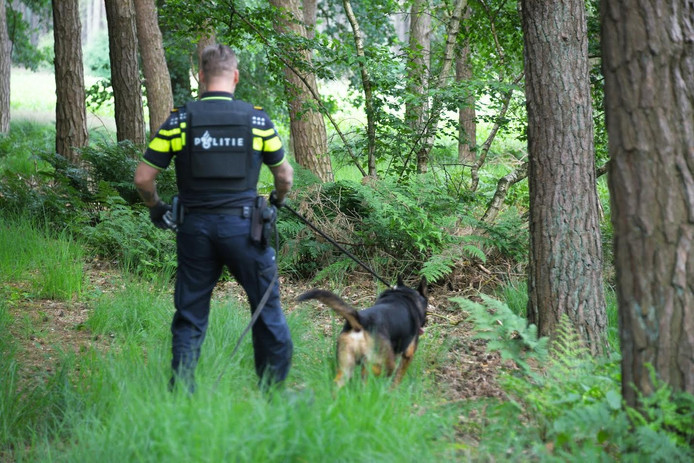 Een politieagent en een politiehond op zoek naar de dader in Poppel