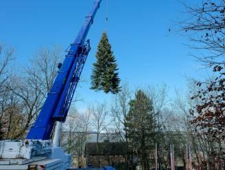 Wie helpt de gemeente Brakel aan een kerstboom?